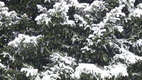 冬天场面-大雪 影视素材