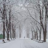 冬天城市公园在早晨 免版税图库摄影