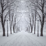 冬天城市公园 免版税库存照片