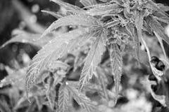 冬天增长 免版税库存图片