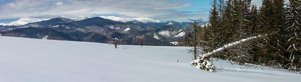 冬天多雪的喀尔巴阡山脉,乌克兰 库存图片