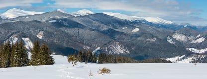 冬天多雪的喀尔巴阡山脉,乌克兰 免版税库存图片