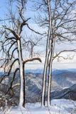 冬天多雪的山森林风景垂直的风景 免版税库存照片