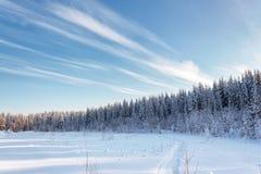 冬天多雪的森林在与云彩的天空下 库存照片