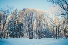 冬天多雪的森林风景,大树 库存照片