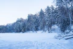 冬天多雪的森林风景 库存照片