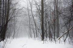 冬天多雪的森林 免版税库存照片