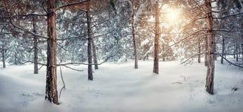 冬天多雪的森林 图库摄影