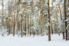 冬天多雪的森林 库存照片