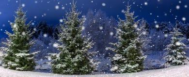 冬天夜全景风景 用雪包括的圣诞树 童话雪和欢乐心情 免版税库存照片