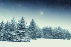 冬天夜在公园 库存图片