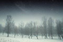 冬天夜在公园 图库摄影