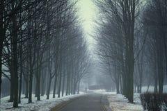 冬天夜在公园 免版税图库摄影