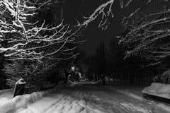 冬天夜在公园 免版税库存图片