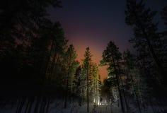 冬天夜森林和满天星斗的天窗人星 免版税库存照片