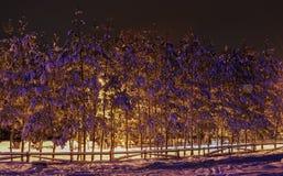 冬天夜视图风景 免版税库存图片