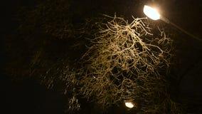 冬天夜雪在公园落 影视素材