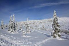 冬天天堂 库存图片
