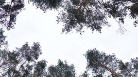 冬天天空在森林里 免版税库存照片