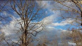 冬天天空4 免版税图库摄影