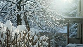 冬天太阳在老校园发光 影视素材