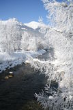 冬天太阳天风景 库存照片