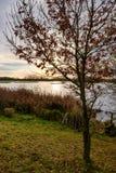 冬天太阳看的设置在与一个大湖的大自然保护中间地面的 库存照片