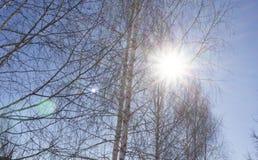 冬天太阳通过树 免版税库存照片