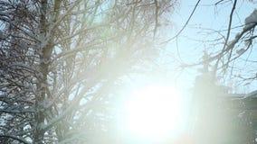 冬天太阳通过用雪盖的树发光 影视素材