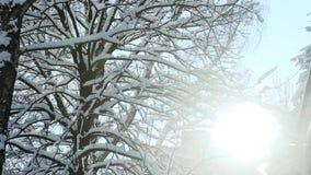 冬天太阳通过用雪盖的树发光 股票录像