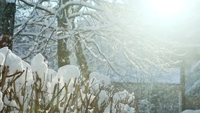 冬天太阳通过用雪盖的树发光 股票视频