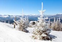 冬天太阳风景在山森林里 免版税库存照片