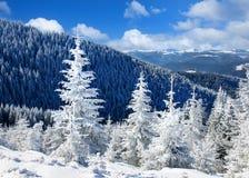 冬天太阳风景在山森林里 免版税图库摄影