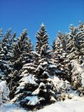 冬天妙境在挪威 免版税库存照片