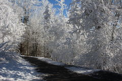 冬天妙境森林 图库摄影