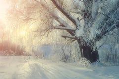 冬天妙境美丽如画的风景在与冬天软的阳光的冷的冬天早晨 库存图片