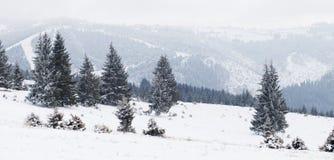冬天妙境风景,多雪的杉树背景 库存图片
