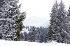 冬天妙境风景,多雪的杉树背景 图库摄影