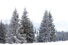 冬天妙境风景,多雪的杉树背景 免版税库存照片