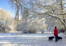 冬天妙境,遛在雪的狗 免版税库存照片