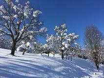 冬天妙境, Goldegg,奥地利 免版税库存照片