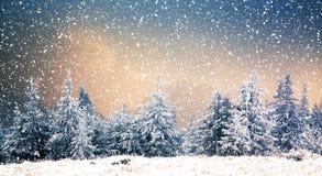 冬天妙境-与多雪的冷杉木的圣诞节背景 免版税库存照片