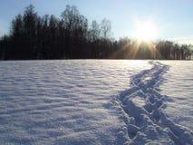 冬天妙境 库存照片