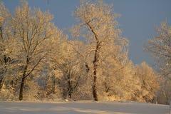 冬天妙境 库存图片