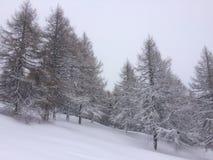 冬天妙境 免版税库存照片