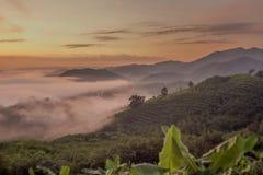 冬天季节有薄雾早晨 免版税库存图片