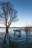冬天季节的被充斥的河岸 免版税图库摄影