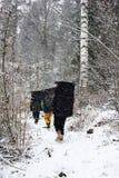 冬天室外休闲 有防震垫的攀岩运动员在一个多雪的森林里, 库存照片