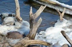 冬天密西西比河的海岸线结构 库存图片