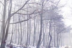 冬天寒冷森林 图库摄影